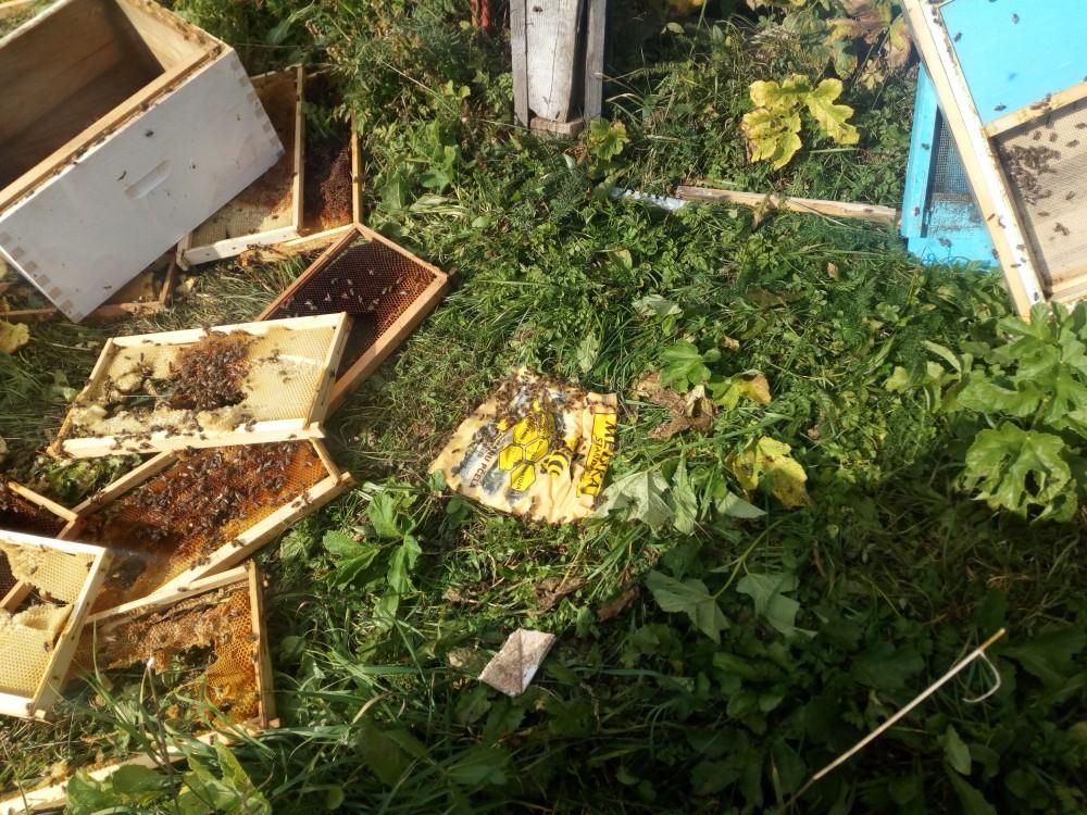 pčelinjak_1.jpg