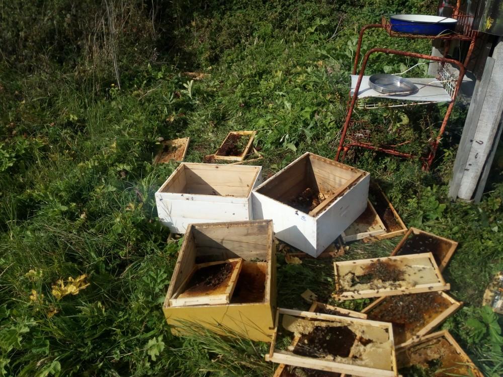 pčelinjak_2.jpg